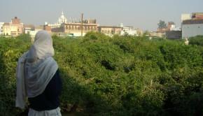 Sevakunj Vrindavan India