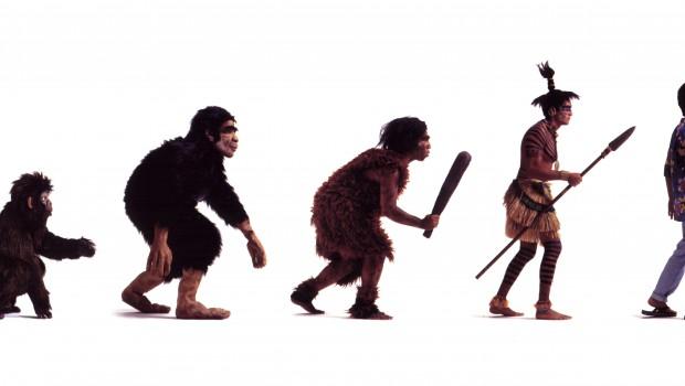 evolution for fun