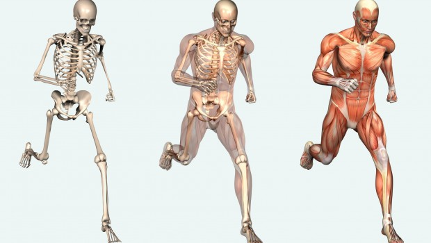 The Human Body is a Machine