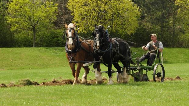 Horse and Plough Farming