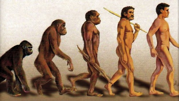 darwins evolution monkey changing into man