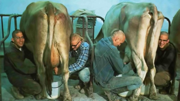 Devotees at New Vrindavan Milking Cows